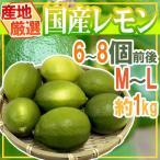 """【送料無料】""""国産レモン"""" 約1kg 6〜8玉前後 M〜L 産地厳選【予約 7月以降】"""