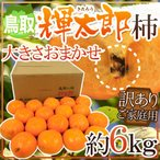 """【送料無料】鳥取産 """"輝太郎柿"""" 訳あり 約6kg 大きさおまかせ【予約 10月以降】"""