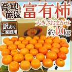 """柿子 - 【送料無料】""""富有柿"""" 訳あり 約10kg 大きさおまかせ 産地厳選【予約 11月以降】"""