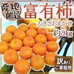 """【送料無料】""""富有柿"""" 訳あり 約5kg 大きさおまかせ 産地厳選【予約 11月以降】"""