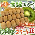 """Kiwi - 【送料無料】香川県 """"香緑 スイート16"""" 16〜20玉前後 約2kg 最低糖度15.5度以上保証【予約 11月下旬以降】"""