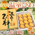 """【送料無料】鹿児島県 """"温室びわ"""" L/2Lサイズ 風袋込約750g ..."""