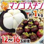 """【送料無料】タイ産 """"マンゴスチン"""" M〜L 12〜16玉 約1kg【予約 5月以降】"""