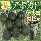 "Papaya - メキシコ産 ""アボカド"" 約1.2kg 6〜8玉 美容と健康に効く!マグロのトロみたいな濃厚果実♪"