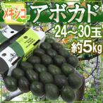 """木瓜 - メキシコ産 """"アボカド"""" 約5kg 24〜30玉 美容と健康に効く!マグロのトロみたいな濃厚果実♪"""
