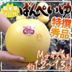 """熊本県八代特産 """"晩白柚"""" ばんぺいゆ 秀品 Mサイズ 約1.2〜1.3kg【予約 12月以降】"""