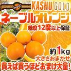 """【送料無料】""""カシューゴールドネーブルオレンジ"""" 大きさおまかせ 約1kg 2kg購入で1kg、3kg購入で2kg、5kg購入で5kg、7kg購入で10kgおまけ!カリフォルニア産"""