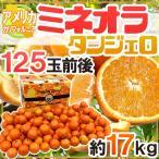 """【送料無料】""""ミネオラオレンジ"""" 125玉前後 約17kg カリフォルニア産 ミネオラタンジェロ【予約 3月以降】"""