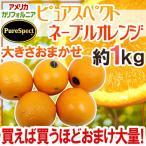 """柑橘类 - 【送料無料】""""プレミアムネーブルオレンジ ピュアスペクト""""約1kg 大きさおまかせ《2kg購入で1kg、3kgで2kg、5kgで5kg、7kgで10kgおまけ》【予約 1月下旬以降】"""
