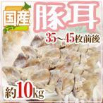 kurashi-kaientai_5538048-b-mimi10kg