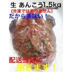 島根県産 超特盛り 生あんこう1尾分1.5kgサイズ(あん肝特大)