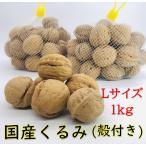 殻付きくるみ 信濃くるみ Lサイズ / 1kg 自社栽培 スーパーフード オメガ3 健康 美容 スイーツ 国産クルミ