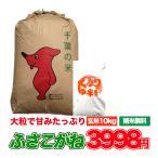 米 10kg 5kg×2袋 千葉県 玄米 お米 白米 ふさこがね 28年産 新米 送料無料