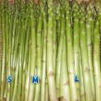 蘆筍 - アスパラガス 1kg 送料無料(A級S〜L)お試し 取り立て発送予約販売(農家朝取り)