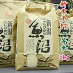 新米 29年 魚沼産コシヒカリ 予約 5k 検査1等米 白米(10月初発送)