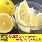 静岡県伊豆産 ニューサマーオレンジ 10k 旬の果実 果物 柑橘類 日向夏