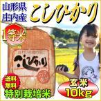 お米 コシヒカリ 玄米 10kg 山形県庄内産 一等米 特A 特別栽培米 5kg×2袋 送料無料 令和元年産 タイムセール 安い