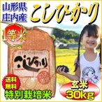 お米 コシヒカリ 玄米 30kg 山形県庄内産 一等米 特A 特別栽培米 5kg×6袋 送料無料 令和元年産 タイムセール 安い