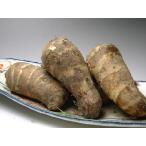 海老芋(京野菜)