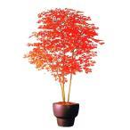 ●代引き不可 送料無料【99012】人工観葉植物 モミジ 92886
