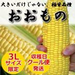 6月発送 長崎県産 とうもろこし おおもの 約3.5kg(約8本) スーパースイートコーン まとめ買い 早割