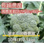 長崎県産(九州産) ブロッコリー 風邪予防 美容やダイエットにも効果的 栄養豊富な野菜 10株(約2.5kg)