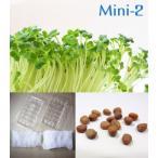 栽培クラブ 野菜 かいわれ大根 水耕栽培セット ミニ2