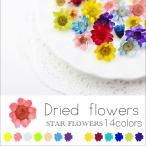 生花を使用したドライフラワー(14色) 約10個入り