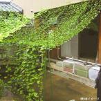 第一ビニール 緑のカーテン5m吊下げ 800mm 5m