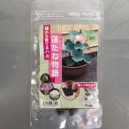 水生植物 種から育てる プランター栽培 自由研究 ネコポス対応 杜若園芸 蓮たねものがたり
