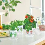 Yahoo!LEAFS ヤフー店栽培キット 野菜 キッチン プレゼント フレッシュフィール 聖新陶芸