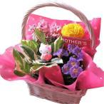 キティ フラワーギフト 鉢植え ミックスプランツ キティ マスコット付き ◆キティ柄・お花はデザイナーにおまかせ♪