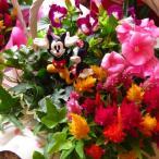 ディズニー フラワーギフト 鉢植え ミックスプランツ ディズニー ノーマル ミッキー ミニー付き ◆お花はデザイナーにおまかせ♪