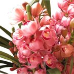 お歳暮 シンビジューム 鉢植え 3〜4本立ち ◆育てやすく毎年お花を咲かせやすい蘭です♪