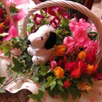 スヌーピー フラワーギフト 鉢植え  デザイナーにお任せ季節のお任せミックスプランツ♪  ◆スヌーピーカラーはおまかせとなります♪