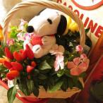 誕生日プレゼント スヌーピー フラワーギフト 鉢植え スヌーピー入り ミックスプランツ ◆デザイナーにおまかせ鉢花♪