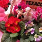 結婚祝い フラワーギフト 鉢植え ウェディングベアー ミックスプランツ ◆デザイナーにおまかせ鉢花♪