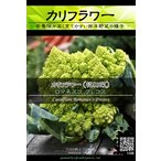 西洋野菜種子 カリフラワー ロマネスコプレコス (サンゴ型) ×3袋【送料無料】 [Life with Green]