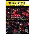 花種 アキレギア ブルガリス ウィンキーシリーズ フォーミュラミックス  47