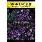 花種 アキレギア ブルガリス クレメンタインシリーズ ダークパープル 62 M