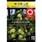 花種 アルセア チェイターズ イエロー  208 B09 052 AM