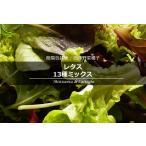 簡易包装版 西洋野菜種子 レタス 13種ミックス [ 直売限定 ][Life with Green]