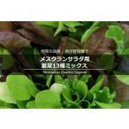 簡易包装版 西洋野菜種子 メスクランサラダ用 葉菜13種ミックス [ 直売限定 ][Life with Green]