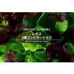 簡易包装版 西洋野菜種子 レタス 2種コンビネーション [ 直売限定 ][Life with Green]