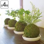人工観葉植物 WA BONSAI ARTIFICIAL GREEN ( 造花 フェイクグリーン 植物 )