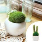 人工観葉植物 消臭アーティフィシャルグリーン サキュレントリフレリウム S タイプ1 ( 造花 フェイクグリーン インテリアフラワー )