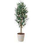 ユーカリ 造花 観葉植物 オフィス 光触媒 送料無料 417A340-19