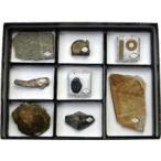 動物植物化石標本 2402-102 8種×1組 ニチカ 理科 教材