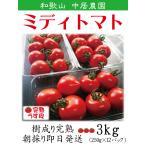 ミニトマト フルーツトマト 完熟を朝採り 即日発送 和歌山 中居農園 3kg (250g×12パック)