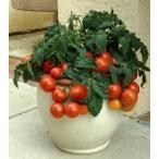 一番低い ミニートマト 6粒
